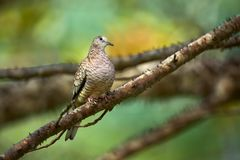 E r Scène de faune de Costa Rica photographie stock