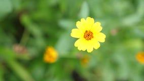 Прекрасный цветущий желтый цветок в саду Летнее время замедление движения 3840x2160 акции видеоматериалы