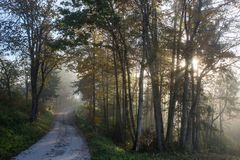 Side road in Slovenia. E road between trees, in a foggy morning near Bled. The road looks like it leads to nowhere Royalty Free Stock Photo