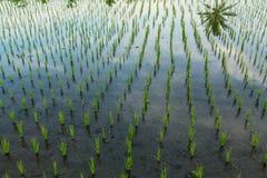 E Rolnictwo zdjęcia stock