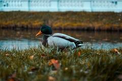 E Russische Natur, Wildniswelt teich lizenzfreie stockfotos