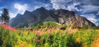 E Sally du Fireweed photographie stock
