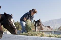 Żeński pracownik Karmi konie Zdjęcia Royalty Free