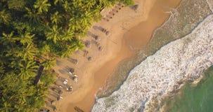 E Sri Lanka, Brummengesamtlänge stock video footage