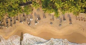 E Sri Lanka, Brummengesamtlänge stock footage