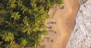 E Sri Lanka, Brummengesamtl?nge stock footage