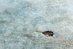 E strato di ghiaccio Fotografia Stock