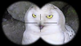 E A través vistos prismáticos r