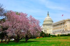 E.U. Capitol Hill na flor da cereja Fotografia de Stock