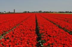 E vermelho é Fotografia de Stock Royalty Free