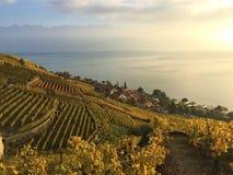 Vista de las terrazas de Lavaux, del lago Léman y de las montañas en el fondo, Suiza imagenes de archivo
