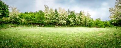 E Vue panoramique Fond de nature de source photos libres de droits