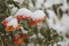 E Winter kam Makro lizenzfreie stockbilder