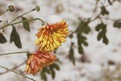 E Winter kam Makro stockfotografie