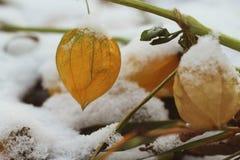 E Winter kam Makro lizenzfreie stockfotografie
