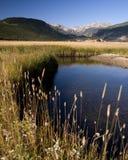 E76 Mountain Meadow. Creek through Moraine Park, Rocky Mountain National Park stock images