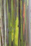 Rainbow Eucalyptus bark Royalty Free Stock Photo