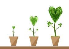 Each okres serce formy drzewo w garnku Fotografia Stock