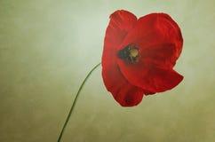 eady bakgrund redigerar blomman till vektorn Royaltyfri Bild