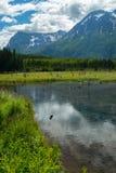 Eagle河自然中心在阿拉斯加 图库摄影
