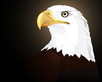 Eagle. Vector: a wild animal-eagle Royalty Free Stock Images