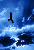 Eagle. Flying in front of a sky with beams of sunlight coming through clouds