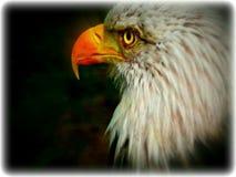 Eagle Foto de archivo libre de regalías