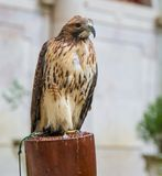 5 eagle Стоковое фото RF