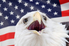 Eagle. In front of america flag stock photo