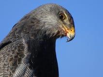 4 eagle στοκ φωτογραφίες με δικαίωμα ελεύθερης χρήσης