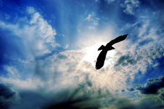 Eagle. An eagle in silhouette flying against a beautiful sky royalty free stock images