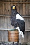 The Eagle Stock Images