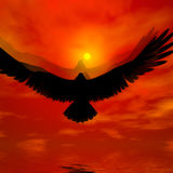 Eagle. Beautiful sky with sun. Eagle flying of light warm Royalty Free Stock Photo