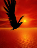 Eagle. Beautiful sky with sun. Eagle flying of light warm Royalty Free Stock Images