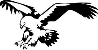Eagle Stockbilder