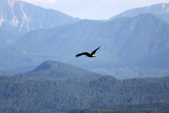 Eagle Royaltyfria Bilder