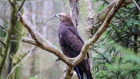 Eagle almacen de video