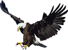 Eagle Stock Fotografie