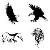 Eagle. American Abstract Eagle  , bird, vector illustration Stock Photos