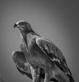 Eagle Imágenes de archivo libres de regalías