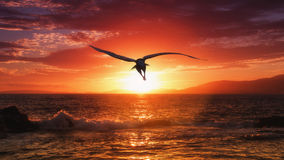 Eagle photographie stock