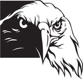 Eagle. Vector illustration of eagle head Royalty Free Stock Images