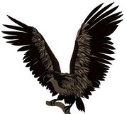 Eagle. Big eagle fluttering by wings Stock Image