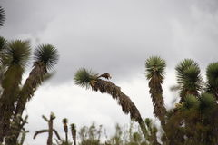 Eagle Fotografía de archivo libre de regalías