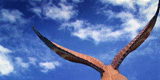 Eagle. An eagle soaring up in the clear blue sky Royalty Free Stock Photography
