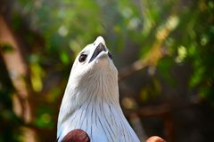 Eagle Royalty-vrije Stock Foto