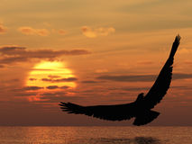 Eagle above ocean Stock Photography