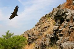 Eagle above the valley-2 Royalty Free Stock Images