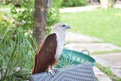 Eagle stock photos