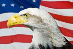 Eagle with an American Flg. Eagle on an American Flag scene Stock Photo